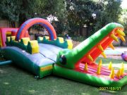 Baby-crocodile-8mx3m--R650